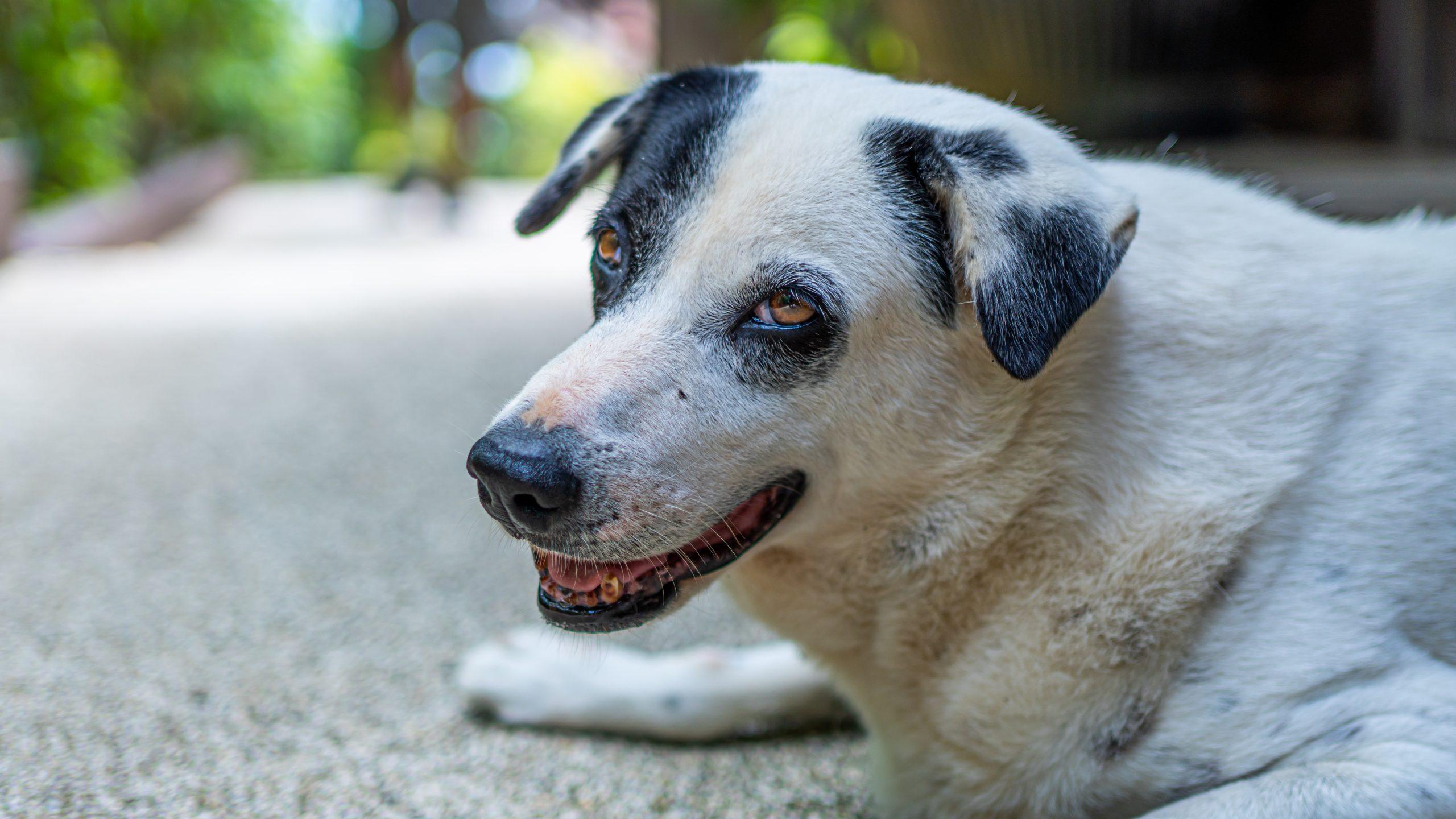 porzucenie zwierzęcia - pies